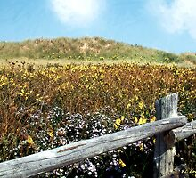 Fence with a View by RC deWinter