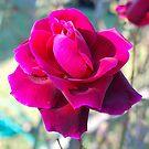 A Crimson Delight by Penny Smith