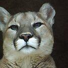 Pride of Cougar Rock by starbucksgirl26