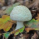 Amanita by relayer51