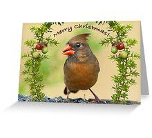 Christmas Greetings from Mrs. Cardinal Greeting Card