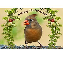 Christmas Greetings from Mrs. Cardinal Photographic Print