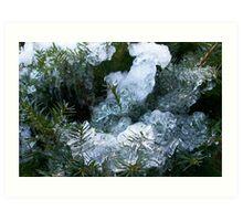 Frozen Bush Art Print