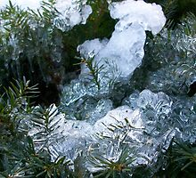Frozen Bush by Deborah  Simpson