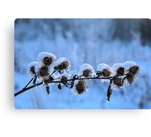 Frosted Burrs Canvas Print