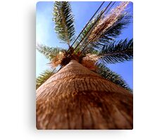Palm Tree - Brazil Canvas Print