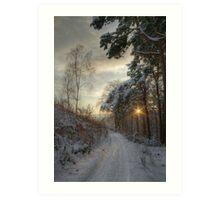 Pirn pines Art Print