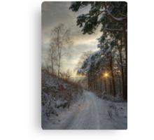 Pirn pines Canvas Print