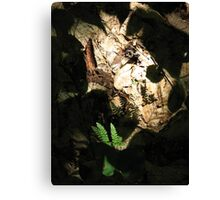Ferns, Shadows, and Light Canvas Print