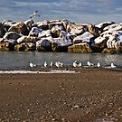 Gulls on the Beach by Kathy Weaver