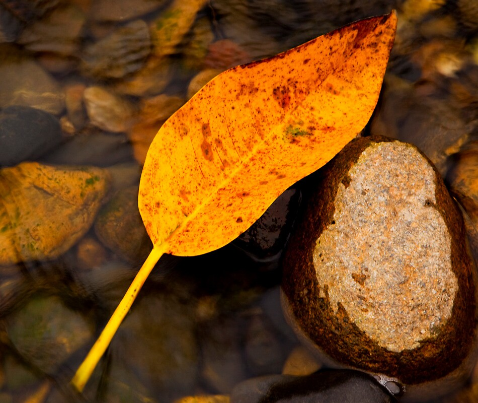 Leaf and Rock by Gary Secombe