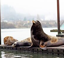 Sea Lions . Astoria, Oregon by sara montour