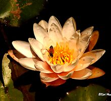 Lily Pad and Bee by Elliot MacDonald