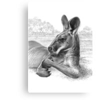 King Of The Plains - Kangaroo Canvas Print