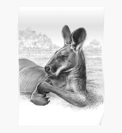 King Of The Plains - Kangaroo Poster