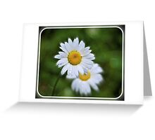Daisies, the promise of spring Greeting Card