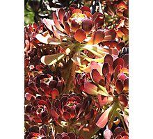 Succulent Gathering Photographic Print