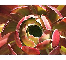 Red Succulent Photographic Print