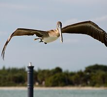 Low Flight by Donna Adamski