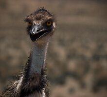 Emu by Corey Stevens
