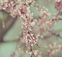 Pink Blooms by Tia Allor-Bailey