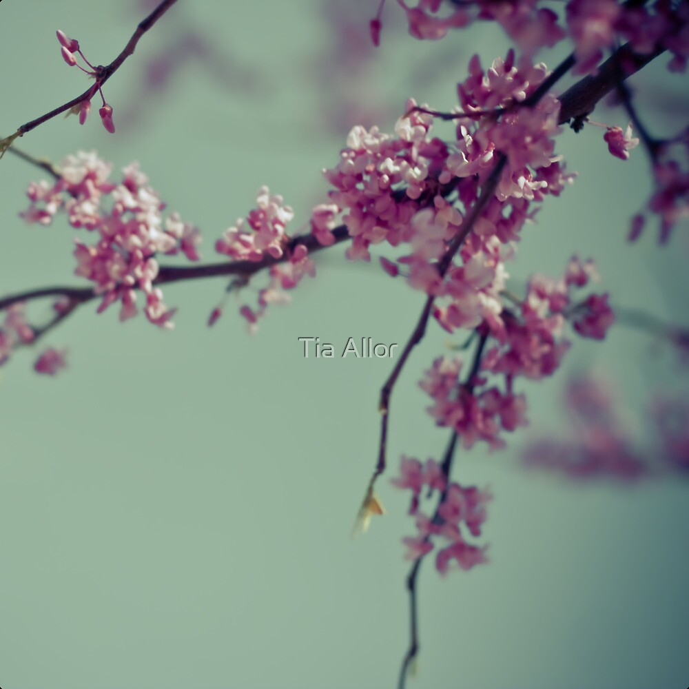Blooming Pink by Tia Allor-Bailey