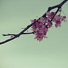 Pink Confetti I by Tia Allor-Bailey