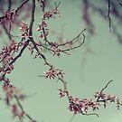 Pink Confetti II by Tia Allor-Bailey