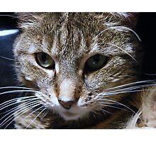 Dottie - My Computer Keyboard Kitty Photographic Print