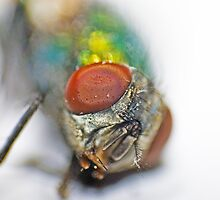 The eyes of the fly by Nathan T