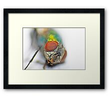 The eyes of the fly Framed Print
