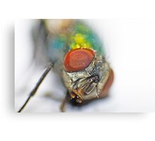 The eyes of the fly Canvas Print