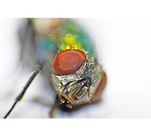 The eyes of the fly Photographic Print