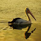 Pelican Gold by Martice