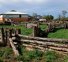 Historic Pastrol Shearing Shed, Canopus by Joe Mortelliti