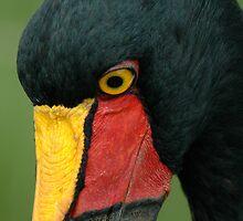 Saddle-billed stork by Paulo van Breugel