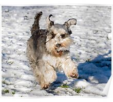 Having Fun in the Snow Poster