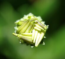 Unfurling (view larger please) by Edge-of-dreams