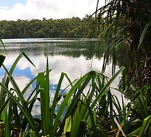 Reflections of Lake Eacham by Geoff Beck