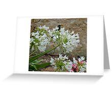 Honey Eater Greeting Card