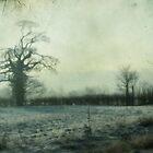 my wonder tree by Sonia de Macedo-Stewart