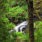 Lower Cascade by Stephen Ruane