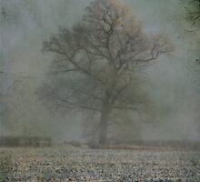 Awakening from the fog by Sonia de Macedo-Stewart