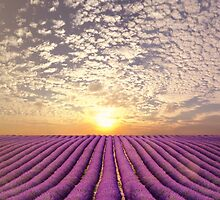 Sunset over a summer lavender field in Provence, France by Brünø Beach .