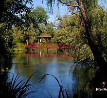 Pond and Bridge - Napa Valley Winery garden by Elliot MacDonald
