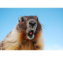 Marty the Marmot Photographic Print