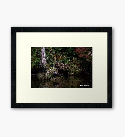 Waccamaw Cypress Swamp, South Carolina Framed Print