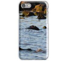 Pelican standing over small bird iPhone Case/Skin