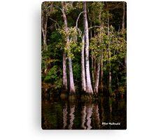 Waccamaw Cypress Swamp, South Carolina Canvas Print