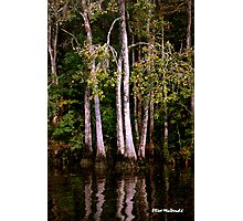 Waccamaw Cypress Swamp, South Carolina Photographic Print